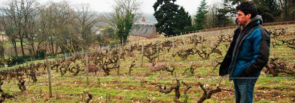 vigne-biodynamie-vouvray-autran